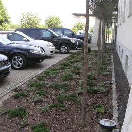 nasadzenia roślin ozdobnych