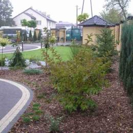 Ogród po nasadzeniu drzew